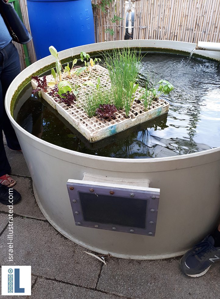 Fish tank. The fish create the nutrients that are used in the hydroponic system. FLoating on top you see a nursery raft.