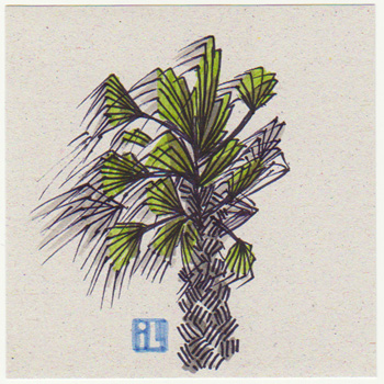 Palm tree in the storm, Israel weather, Israel Illustrated